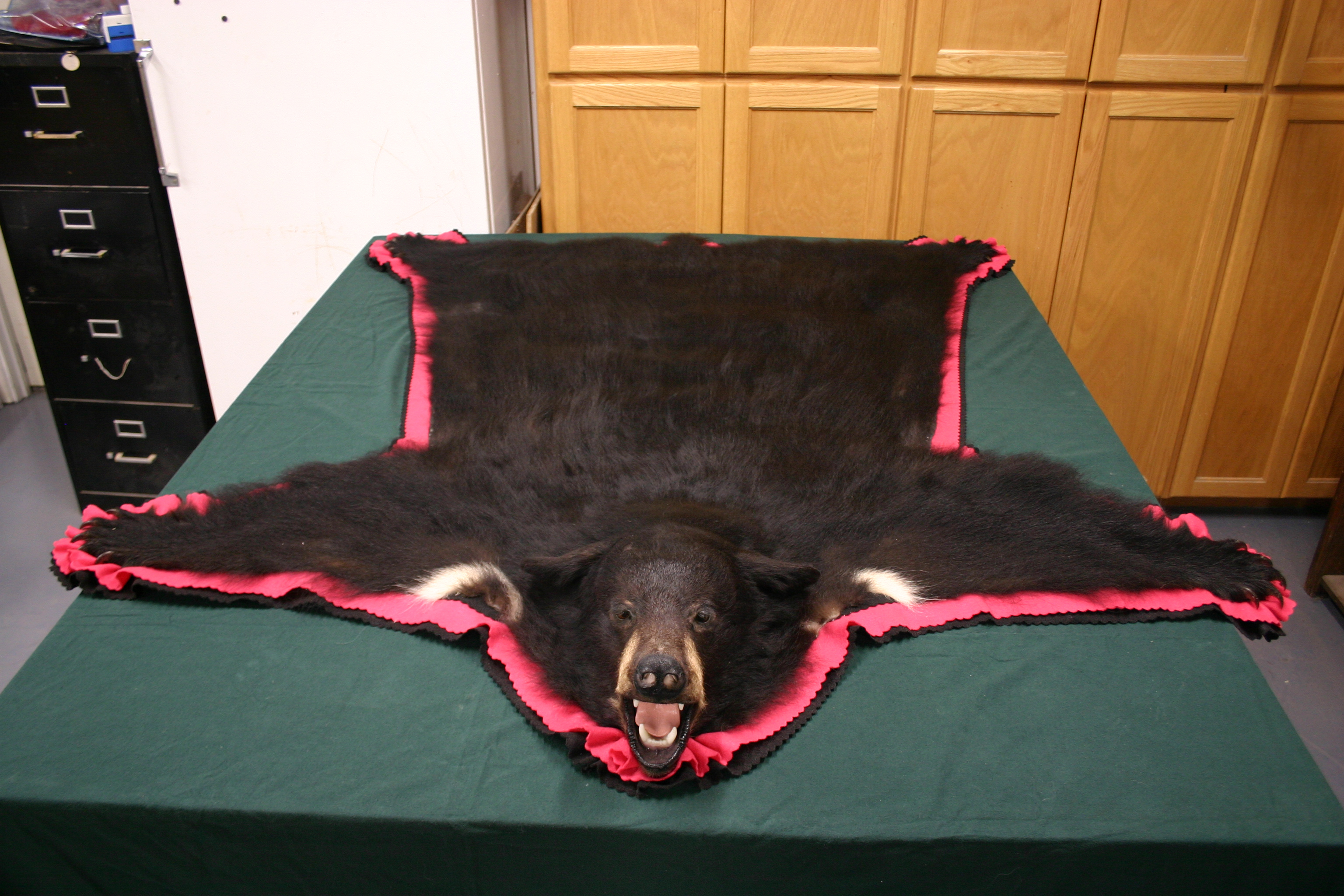 Real black bear rug for sale craigslist