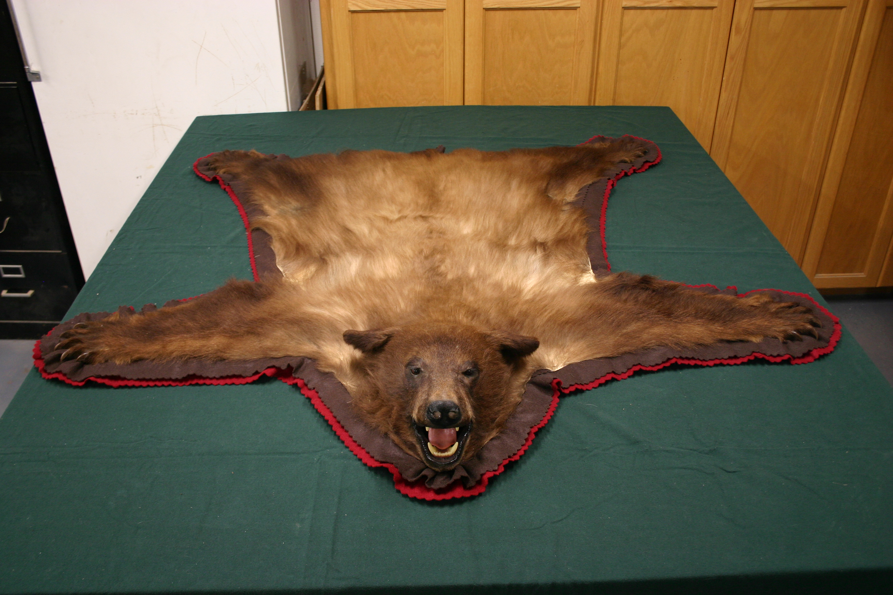Click The Picture For The Full Size. Bear Rug ...
