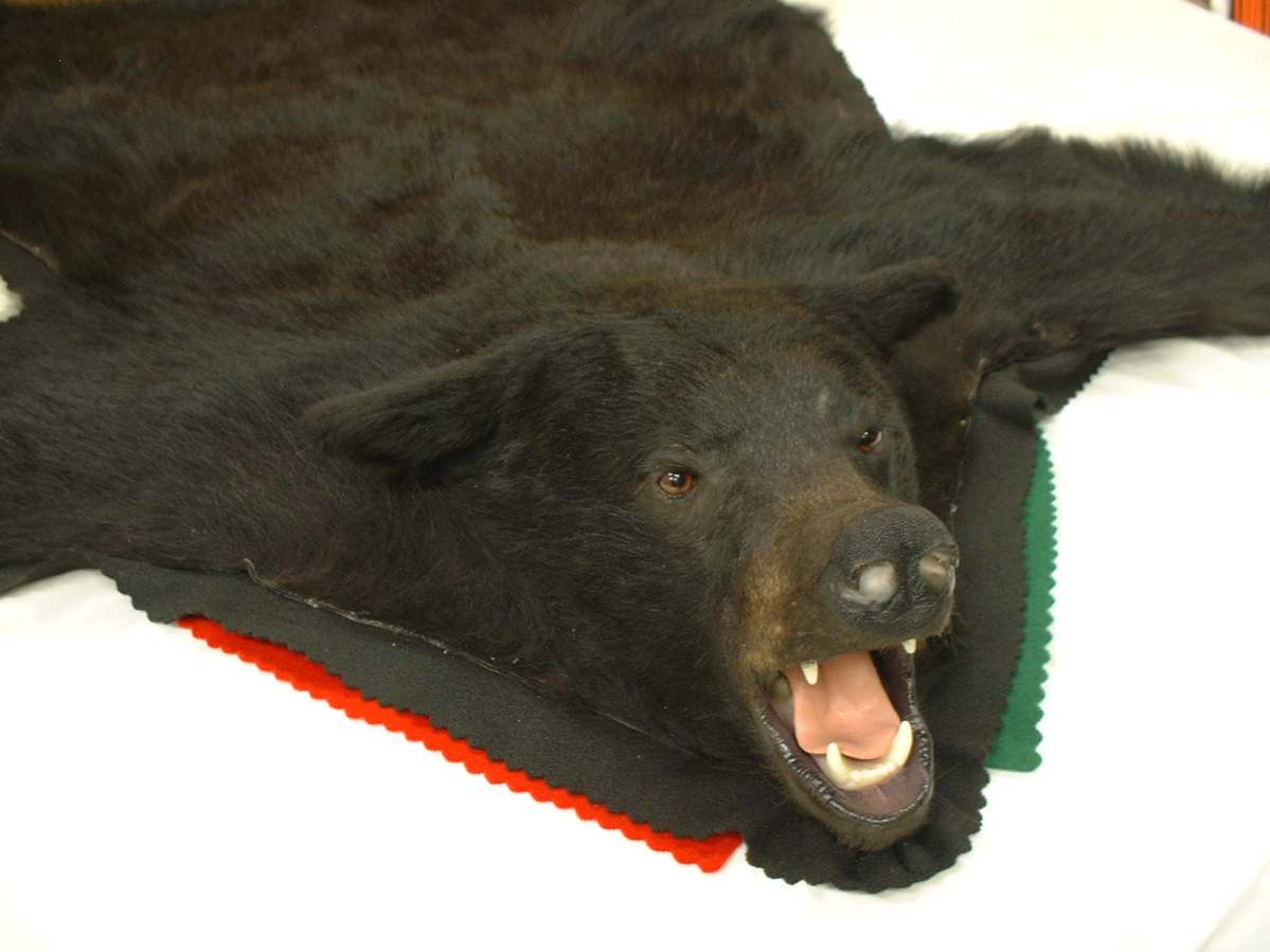 Bear Rugs With Head Rugs Ideas
